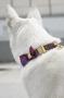 Coleira de Pescoço Estampa Jazz Dog.U cães