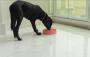 Comedouro Lento Pet Brink Slow Bowl Espiral para cães