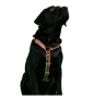 Peitoral Educativo H Slim para cachorro Paris Dog.U