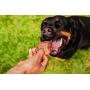 Focinho de Suíno  Petisco Desidratado Lecker para cães
