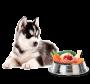 Suplemento Alimentar Nutroplus Crescimento para cães filhotes alimentação caseira 100g