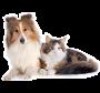 Suplemento Alimentar Nutroplus ZeoPlus Saúde Intestinal para cães e gatos 100g