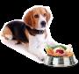 Suplemento Alimentar Nutroplus Zero Fósforo para cães filhotes e adultos 500g