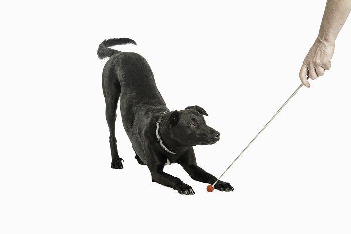 Bastão Target Stick para treinamento e adestramento de cães