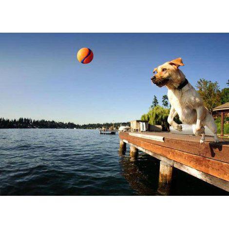 Bola aquática e interativa Ultra Ball Chuck It para cães
