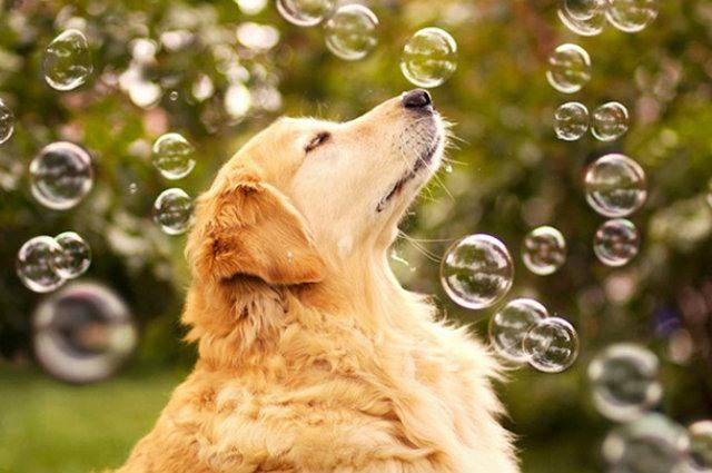 Bolha de sabão Pet Bolhas Pet Games para cães