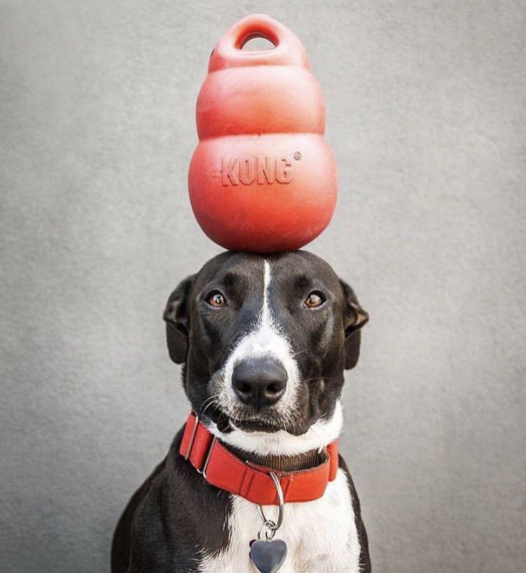Brinquedo Interativo para cães Bounzer Kongão Classic KONG