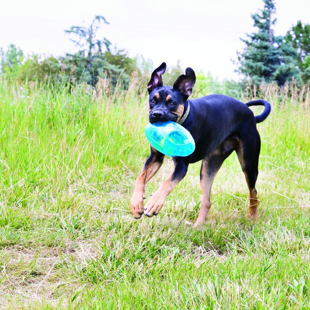 Brinquedo Jumbler Football Bola KONG para cães