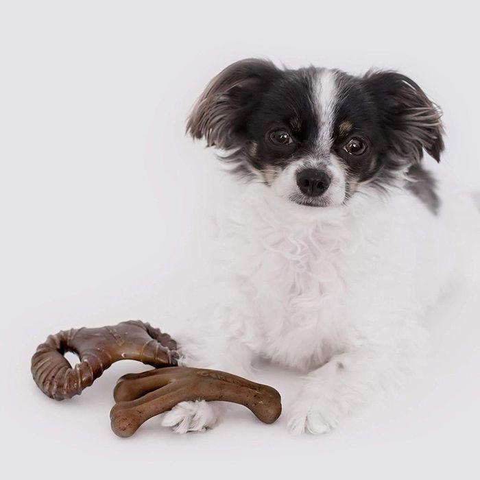 Brinquedo de roer para cães Benebone PP Tiny 2 Pack