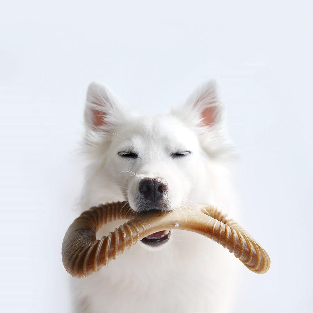 Brinquedo de roer para cães Dental Chew Bacon Benebone