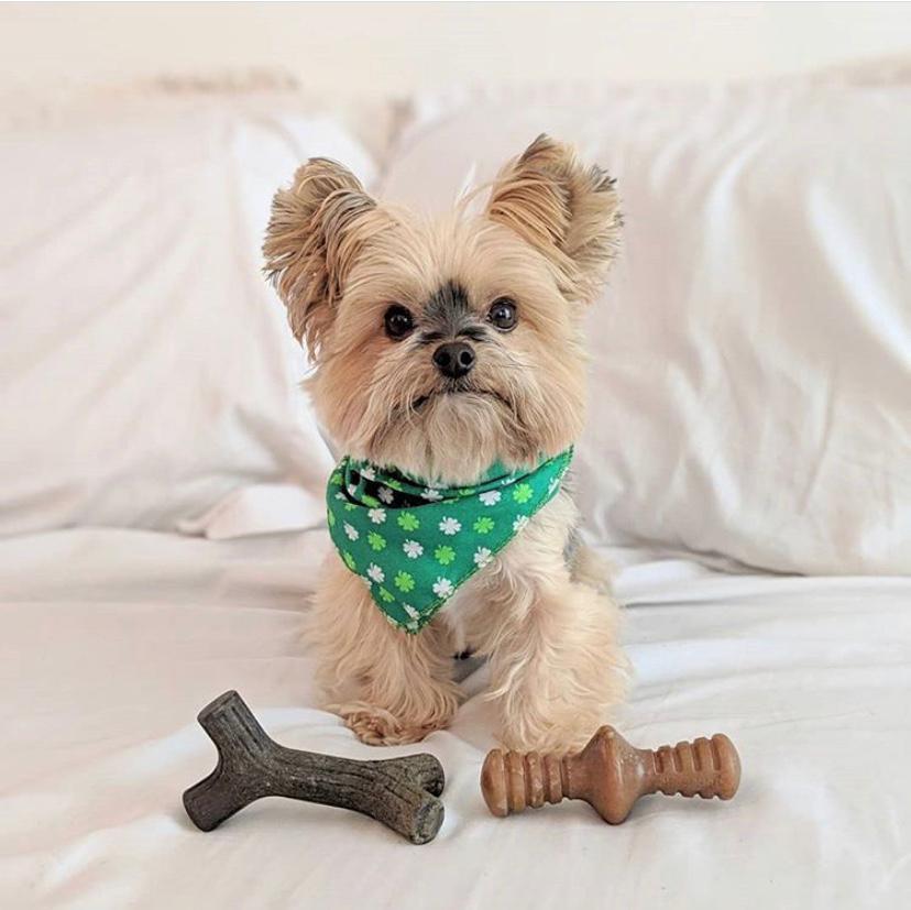 Brinquedo de roer para cães filhotes Benebone Puppy 2- Pack  Zaggler + Maplestick