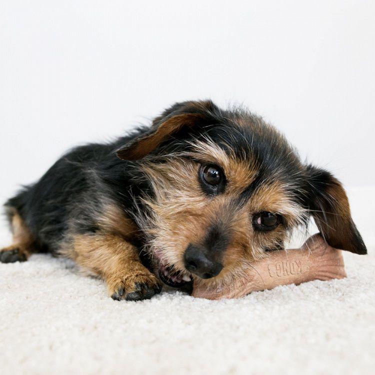 Brinquedo de roer Chewstix Stick Aroma Bacon KONG cães