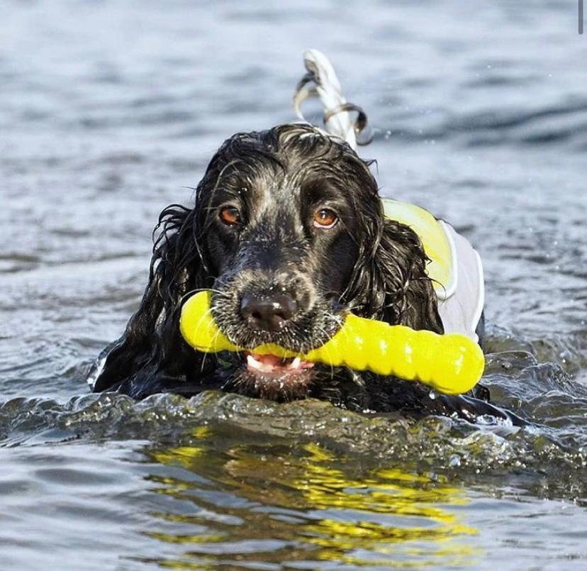 Brinquedo Interativo e Aquático Bastão Borracha Foaber