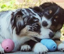 Brinquedo para cães filhotes Interativo Recheável Puppy KONG