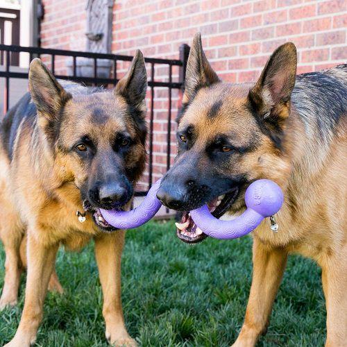Brinquedo Resistente cabo de guerra Ogee Stick KONG para cães