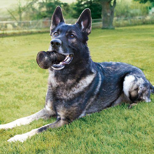 Brinquedo Resistente DuraMax Dumbbell KONG com apito para cães  G