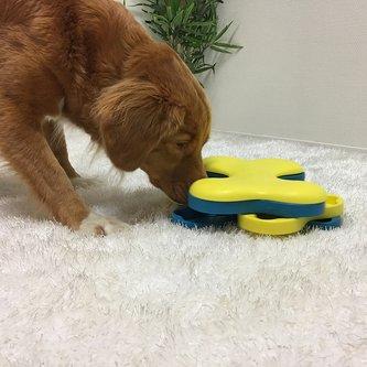 Brinquedo Tabuleiro Dog Tornado Nina Ottosson para cães e gatos Nível intermediário