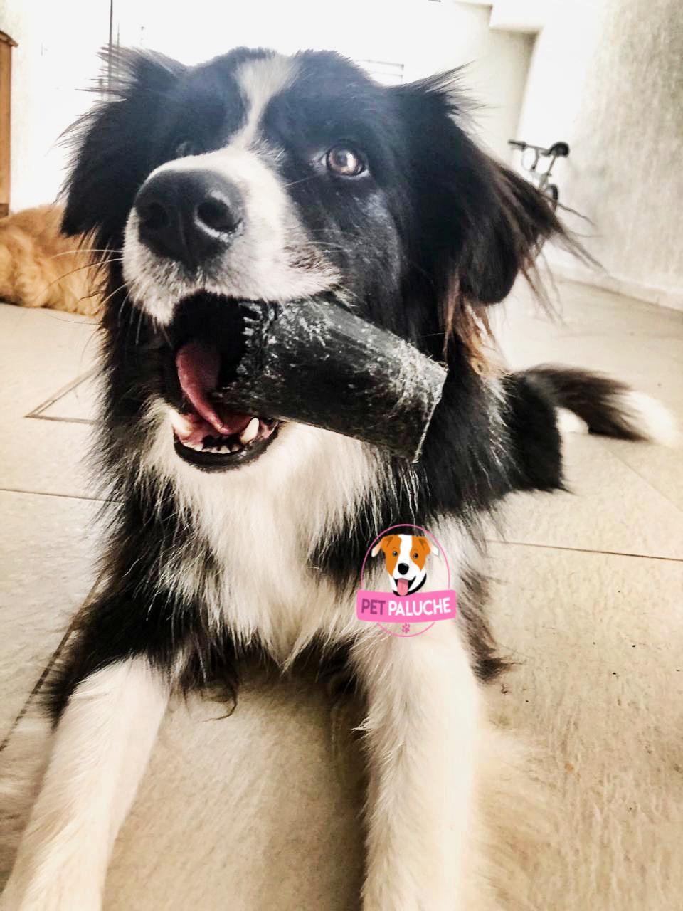 Chifre de Boi Puretoy Mordedor Natural para cães