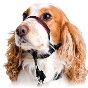 Coleira de face ou Cabresto Halti para cães