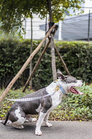 Coleira de Pescoço Estampa Samba Dog.U cães