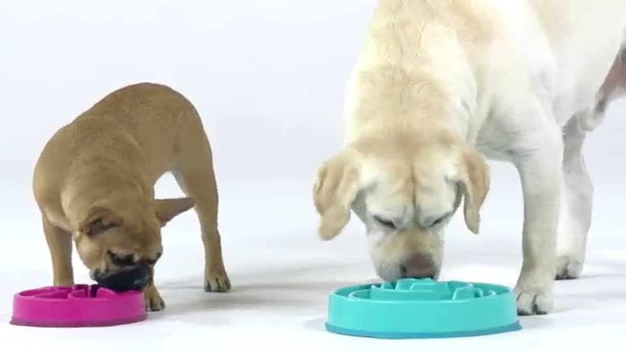 Comedouro Lento interativo para cães Fun Feeder Azul Pequeno