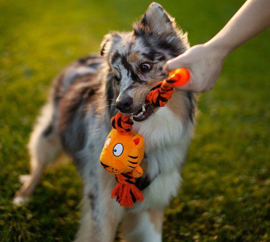 Corda para Cabo de Guerra com apito Tuggerz Outward Hound para cães grandes