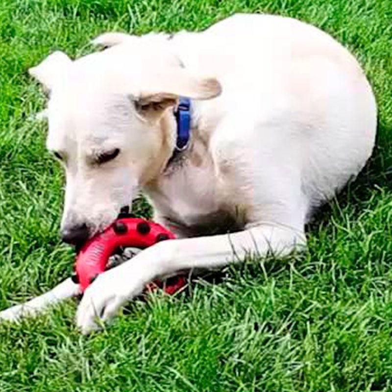 Brinquedo para cães Dotz Circle  KONG