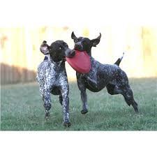Brinquedo para cães Frisbee Flyer Classic Kong