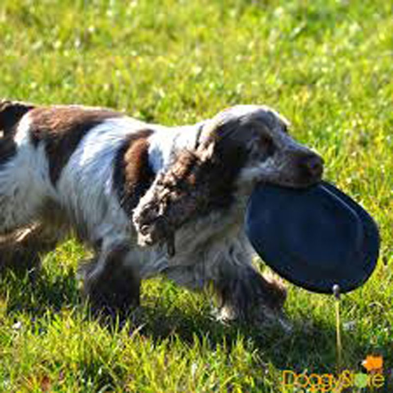 Frisbee para cães Flyer Extreme Kong