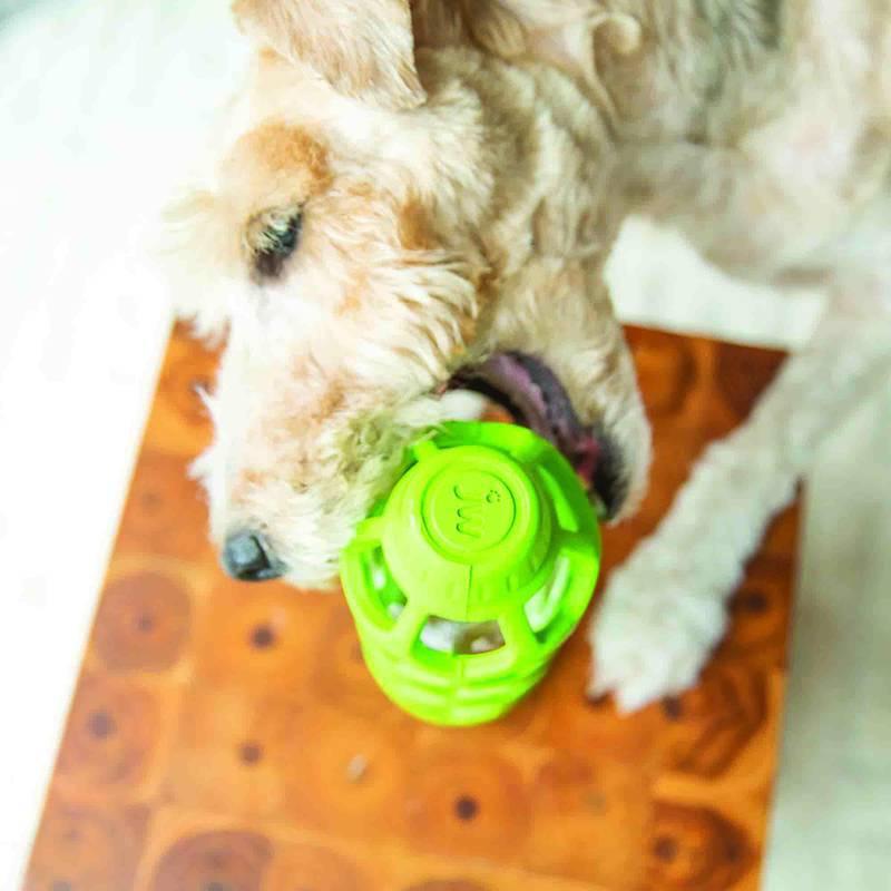 Holee Bottle com garrafa plástico para cães JW