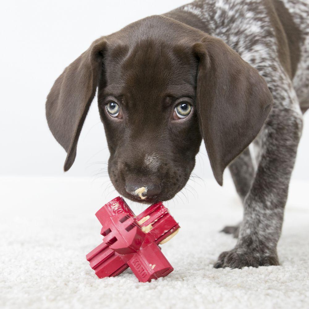 Brinquedo recheável para cães KONG Jump'n  Jack