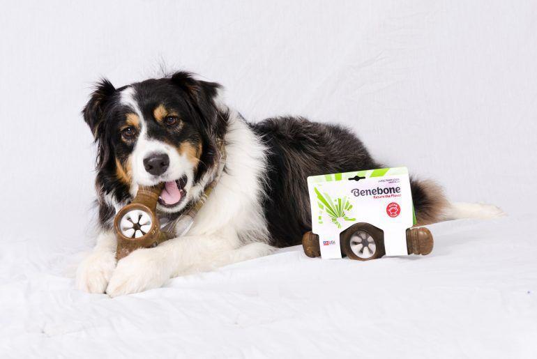 Kit para Roer e desestressar para cães G
