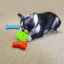 KONG Quest Star Pod Brinquedo Recheável para cães