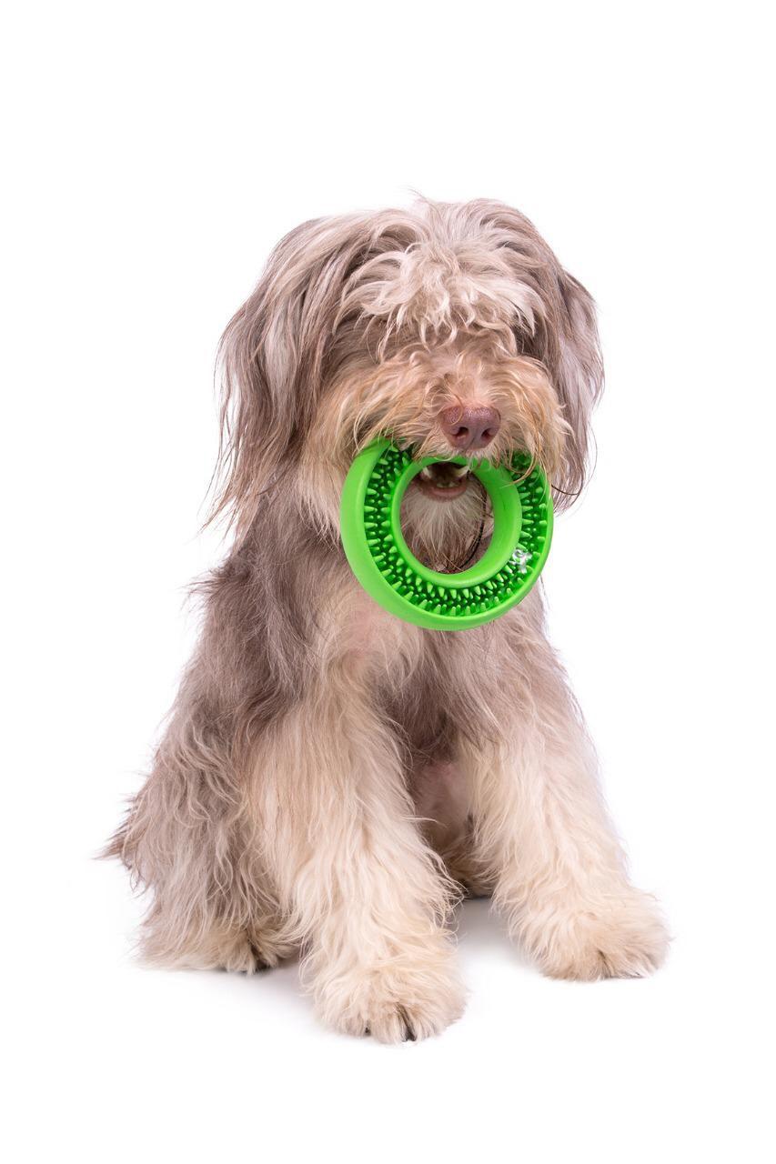 Kit Limpeza dos Dentes para cães com Mordedor Massageador Buddy Toys