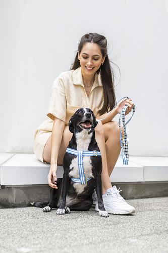Peitoral Educativo H Slim para cachorro Samba Dog.U