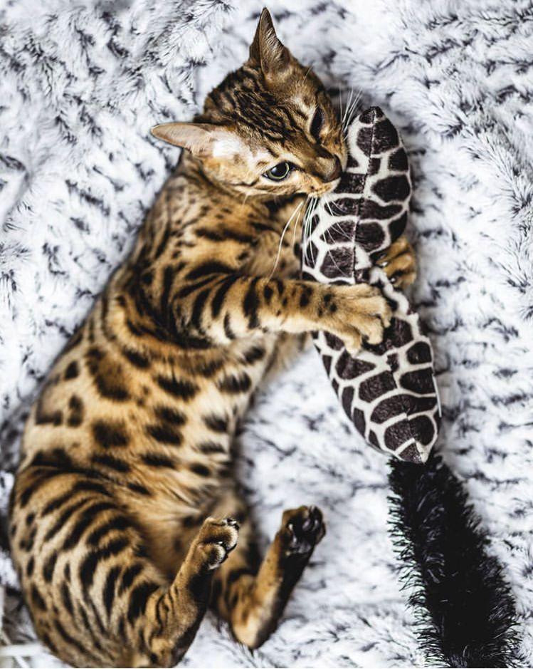 Brinquedo para gatos Pelúcia com Catnip Kickeroo Pattern KONG