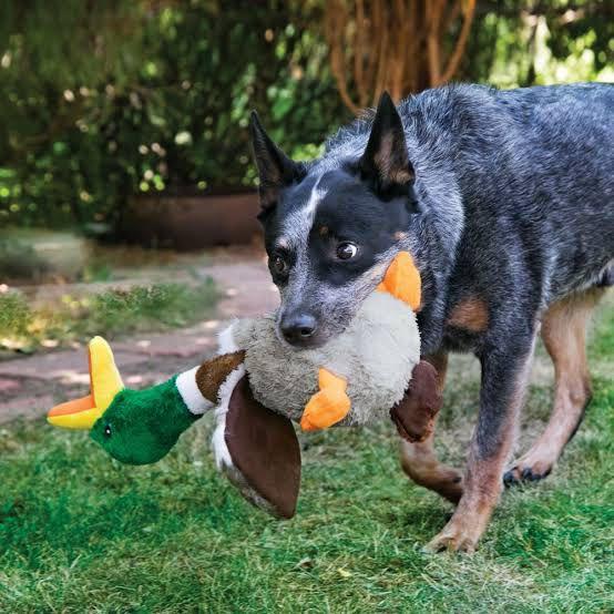 Brinquedo para cães Pelúcia com som de Pato KONG