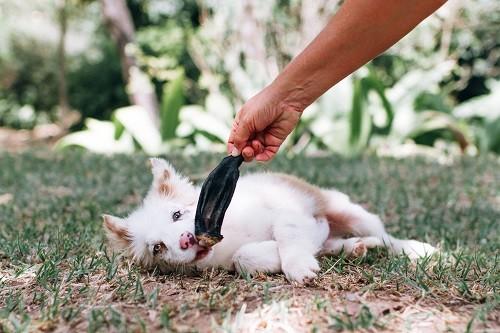 Petisco Desidratado Lecker Orelhas de Carneiro para cães