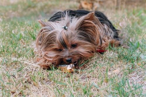Petisco Desidratado Lecker Peixinho Lambari para cães
