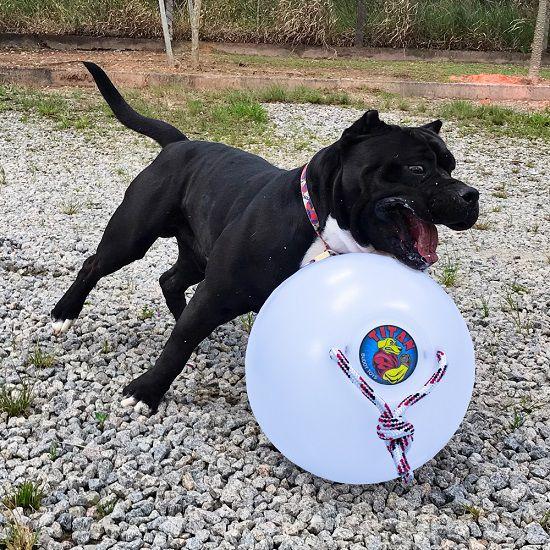 Super Bola Titan Gigante Resistente com corda para cães Buddy Toys