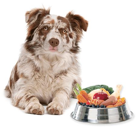 Suplemento Alimentar Nutroplus Manutenção para cães adultos alimentação caseira 500g