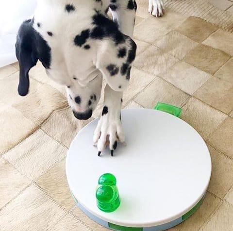 Brinquedo Tabuleiro Jogo Interativo Dog Training Pawise