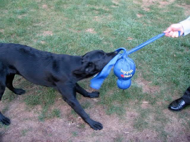 Brinquedo para cães interativo Wubba Kong