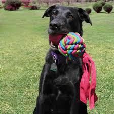 Brinquedo para cães Interativo Wubba Weaves Kong Small