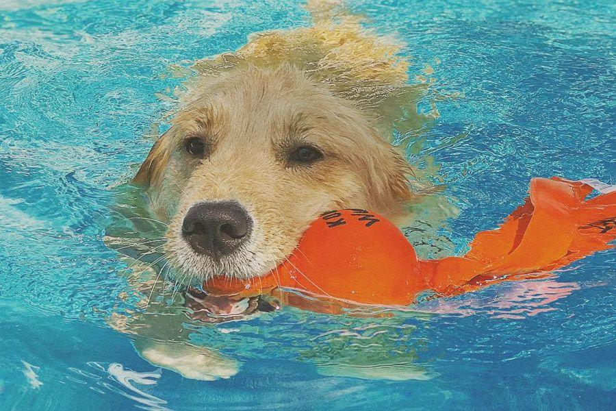 Brinquedo Aquático para cães Wubba Wet KONG