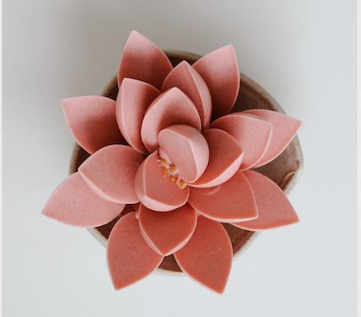 Flor de Framboesa (Somente para a região de Curitiba)