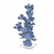 Coral Alto Azul Lápis