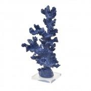 Coral Alto Azul Marinho