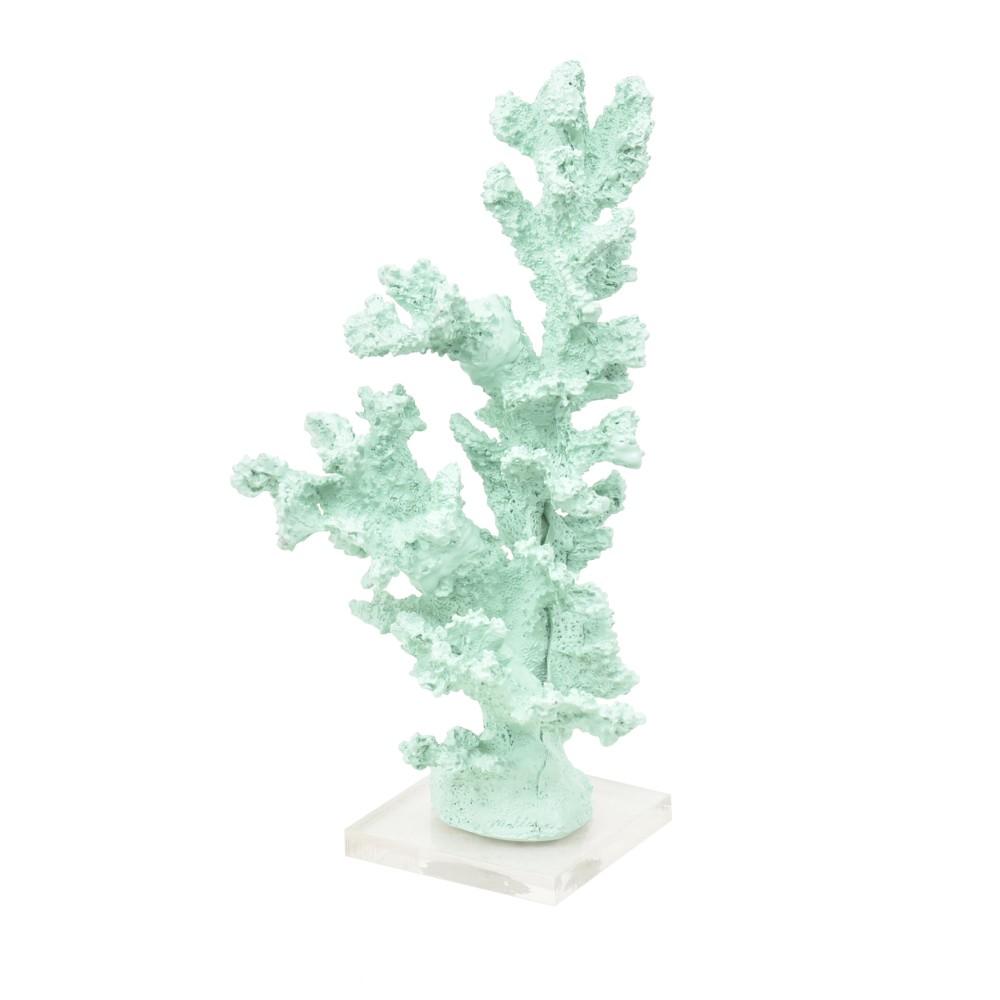 Coral Alto Acqua