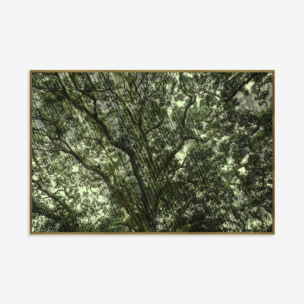 Quadro Floresta 183x123cm